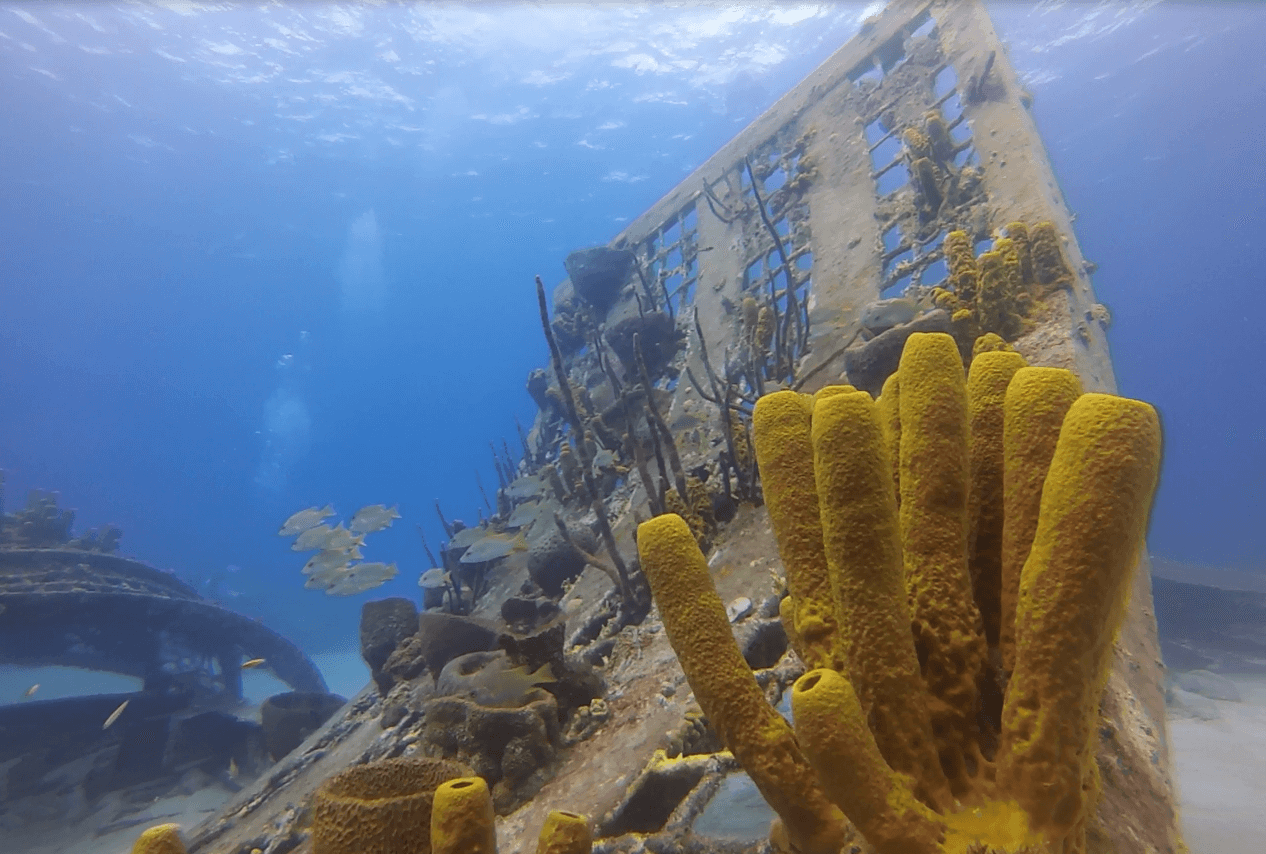 Coral Ball Dive pic